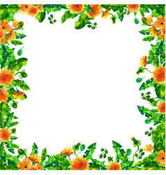 watercolor spring dandelion flowers blossoms vector image