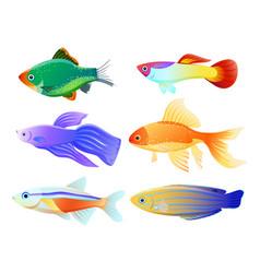 Aquarium fish specie cartoon set vector