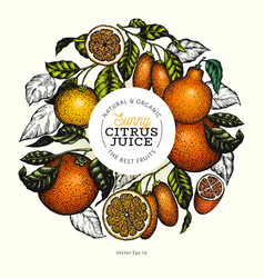 citrus fruits design templete hand drawn colour vector image