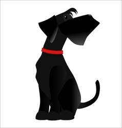 Dog breed Giant Schnauzer color black vector image