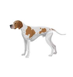 English pointer dog vector
