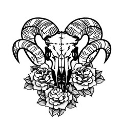 rose tattoo with skull of a sheep horns vector image