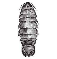 salve bug vintage vector image