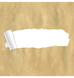 Package Paper Torn vector image vector image