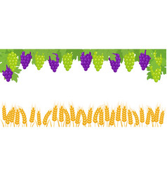 Banner with bunches grapes wheat ears vector