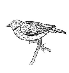 Hand drawn bird on white sitting on a vector