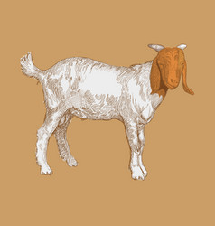 hand drawn goat vector image
