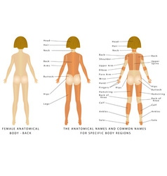Female body Back vector image vector image