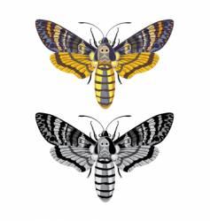Acherontia Apropos vector image vector image