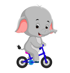 cute happy elephant cycling vector image