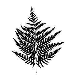 fern leaf silhouette vector image