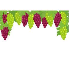 Green and dark red grapes border vector
