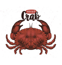 Seafood crab retro vector