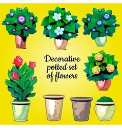 Set of decorative plants flowers and empty pots vector image