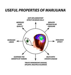 Useful properties of smoking cannabis cannabis vector