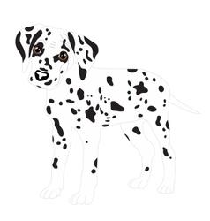 Dalmatians cute puppy sad vector image vector image
