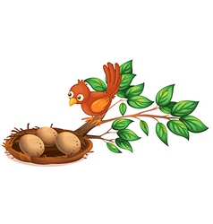 A bird watching the eggs vector image
