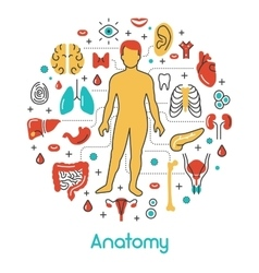 Anatomy Thin Line Icons Set with Human vector