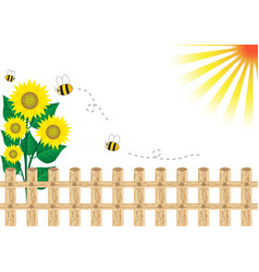 Background sunflower vector