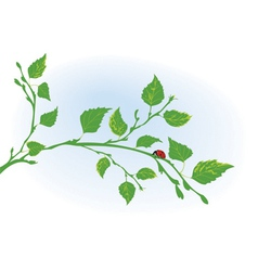 branch of birch and ladybird vector image