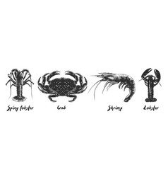 engraved vintage style spiny lobster crab vector image