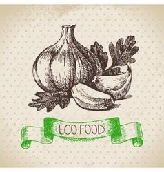 Hand drawn sketch garlic vegetable Eco food vector image