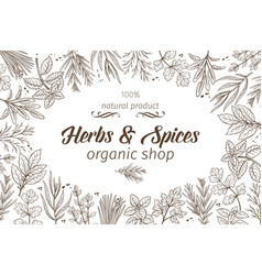 Hand drawn sketch herbs and spices vector