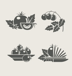 tomato set icons vector image