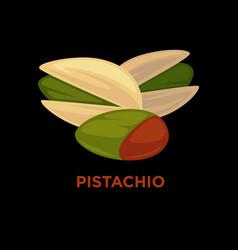 pistachio nut cartoon vector image vector image