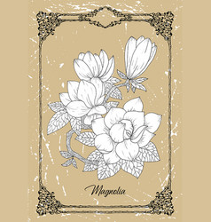 black and white drawing magnolia vector image