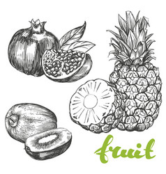 Fruit pomegranate kiwi pineapple set hand drawn vector