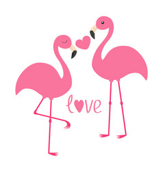 Pink flamingo couple and heart word love exotic vector