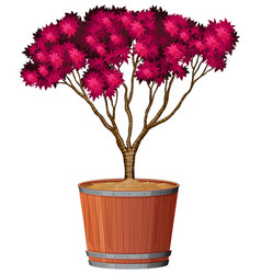 plant in pot with soil isolated vector image