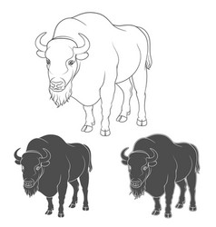Set of black and white images with a bison vector