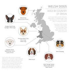 Dogs country origin walsh dog breeds vector
