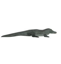 freshwater crocodile isolated on white background vector image