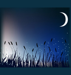 Meadow at night vector image