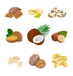 Set nuts vector