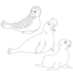 Seals vector image vector image