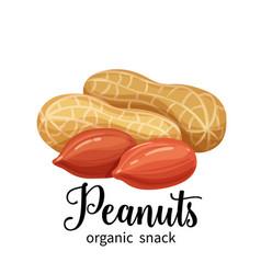 peanuts in cartoon style vector image