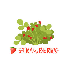 ripe strawberry berry bush with name vector image