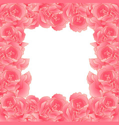 Pink carnation flower border dianthus caryophyllus vector
