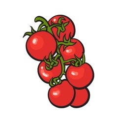 Sketch style drawing of shiny ripe red cherry vector image vector image