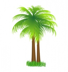 coconut tree vector image
