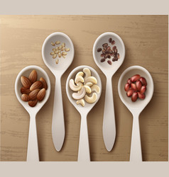 different nuts in spoons vector image