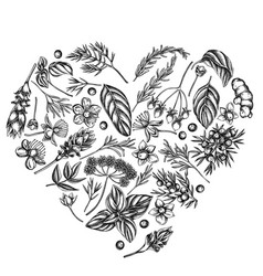 heart floral design with black and white angelica vector image
