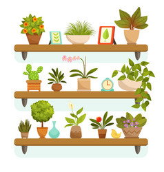 home plants and decorative flowers in pots vector image vector image