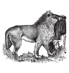 Lion vintage vector