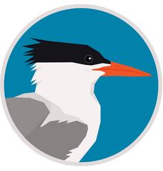 royal tern bird round frame vector image