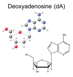 Structural chemical model of deoxyadenosine vector image